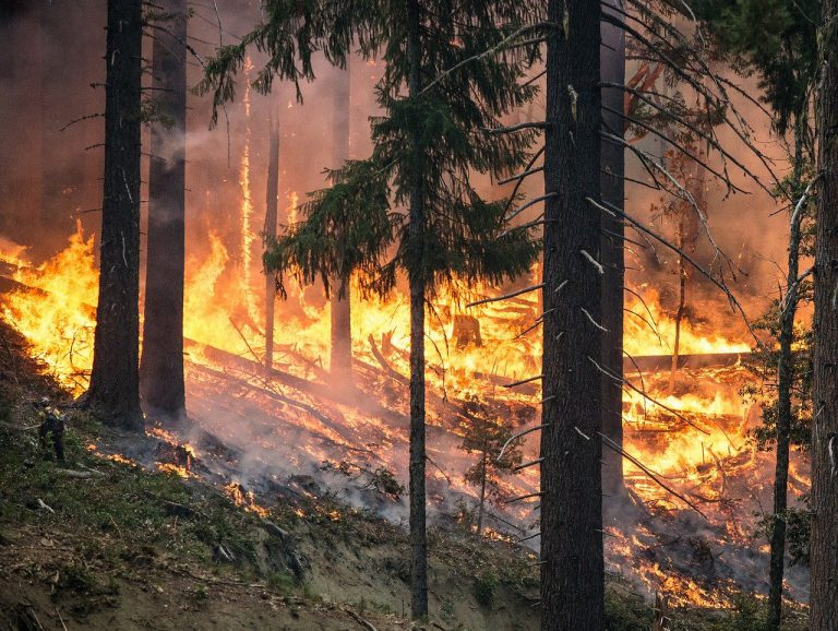 Technology as scientists' answer to the problem of wildfires